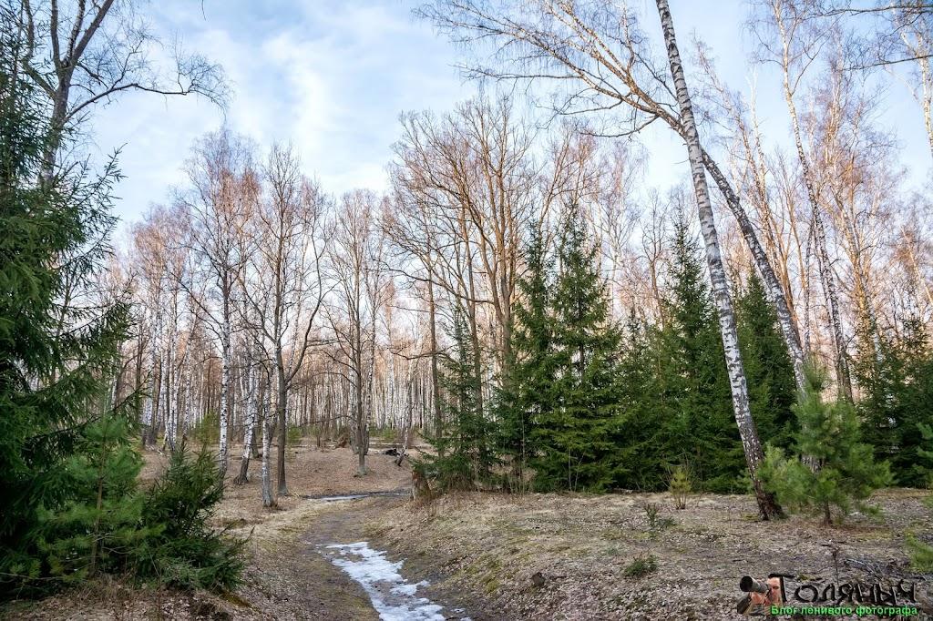 Весенний лес. Кое-где ещё лежит снег