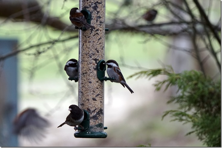 lopez birds on feeder 122417 00000