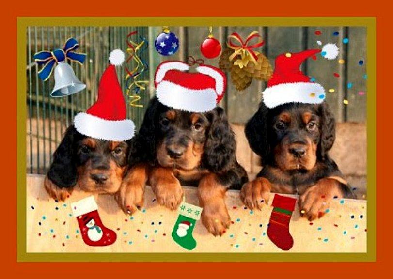 ...tschüß Ihr Süßen und ein super tolles Hundeleben in Eurem neuen Zuhause. http://www.kemtins-black.de oder http://www.vdh-gordon-setter.de oder http://www.gordon-setter-welpen-zucht.de