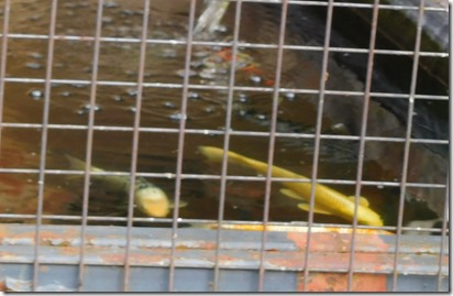 4 fish tank