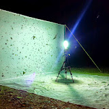 Collecte nocturne. San Juan (Yungas, Bolivie), 10 décembre 2014. Photo : Jan Flindt Christensen