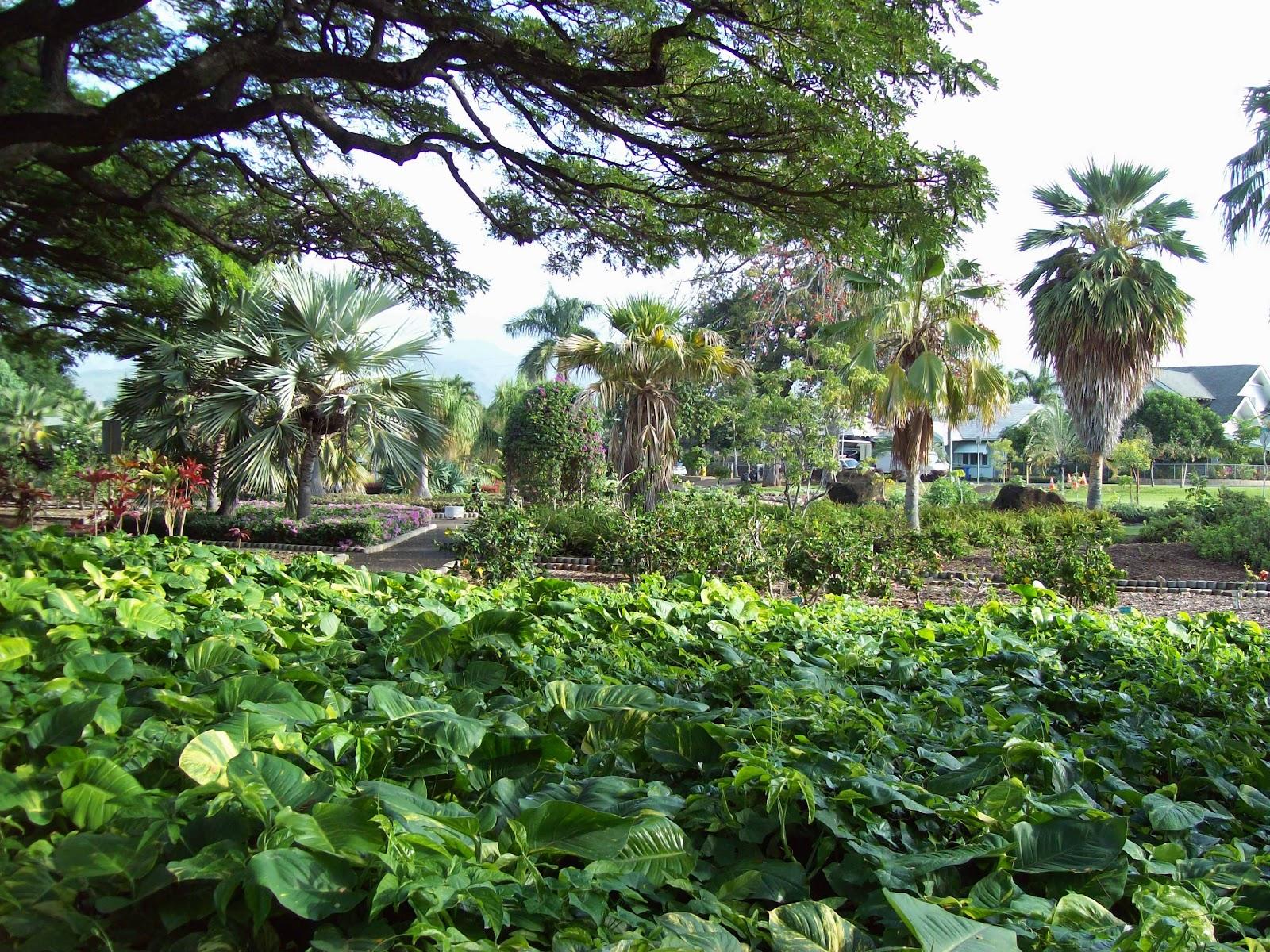 Hawaii Day 2 - 100_6500.JPG