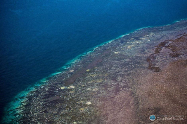 Aerial view of bleached coral in the Great Barrier Reef. This aerial survey in March 2016 found 95 per cent bleached coral off Cape Grenville in north Queensland. Photo: ARC Centre of Excellence Coral Reef Studies