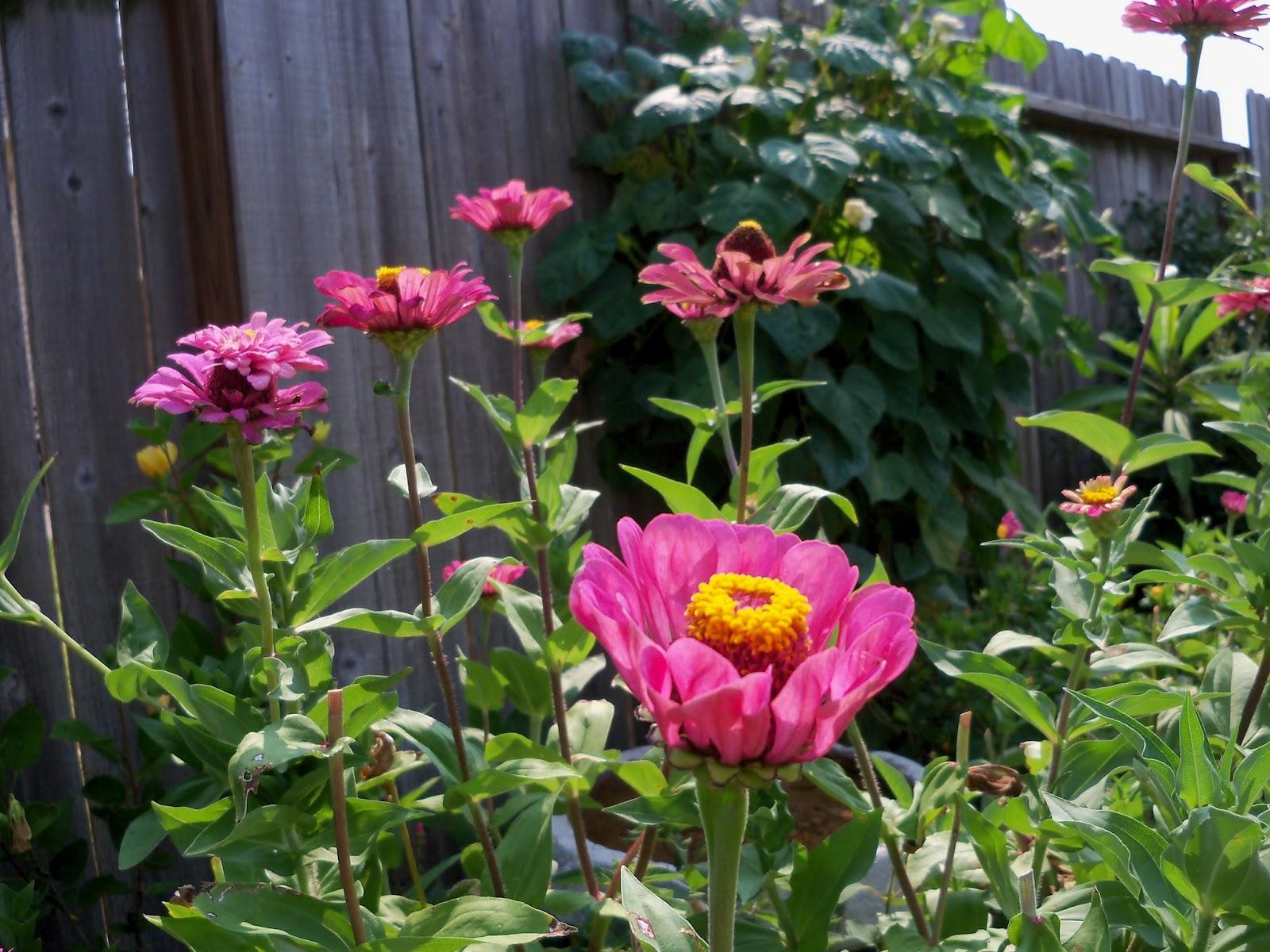 Gardening 2011 - 100_9356.JPG