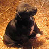Available black female