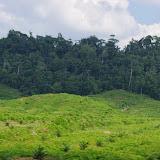 Déforestation et palmiers à huile. Calderon (San Lorenzo, Esmeraldas), 29 novembre 2013. Photo : J.-M. Gayman