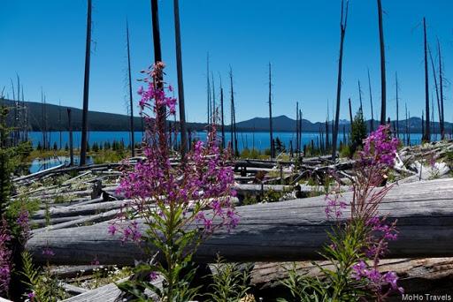 Waldo Lake Camping-044