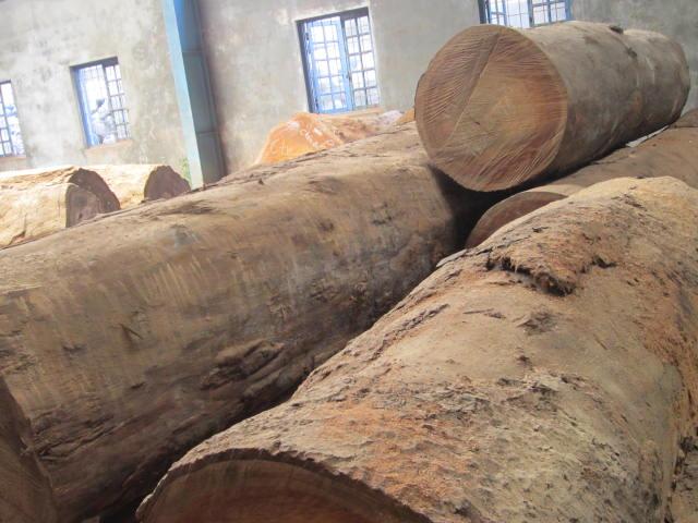 Tìm hiểu về gỗ Lim