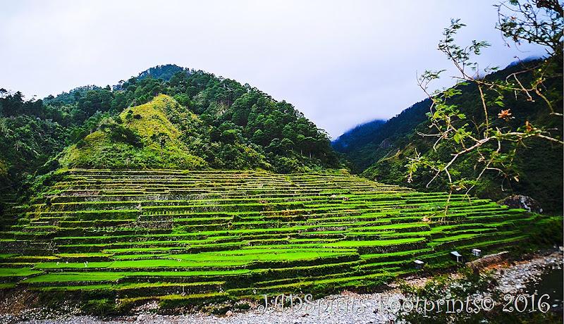 Rice Terraces of Bontoc