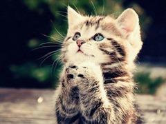 Cute=Cat01 (5)