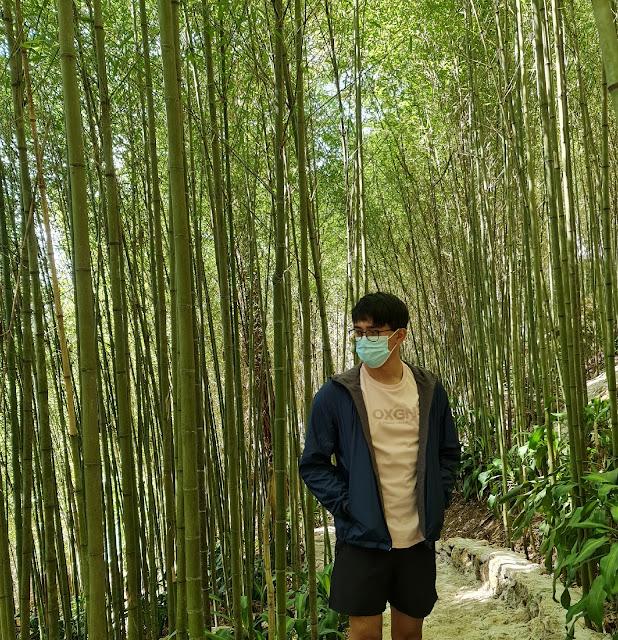 Mirador Arashiyama Bamboo Grove  Baguio City