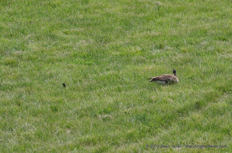 05-11-12 Wildlife Prairie State Park IL - IMGP1569.JPG