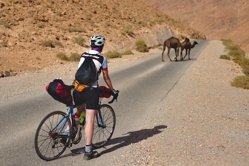 There be camels - bucata de drum unde am intalnit mai multe camile decat masini.