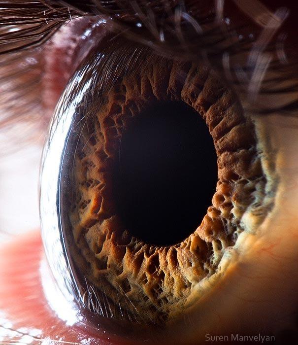 human eyes 1 (13)