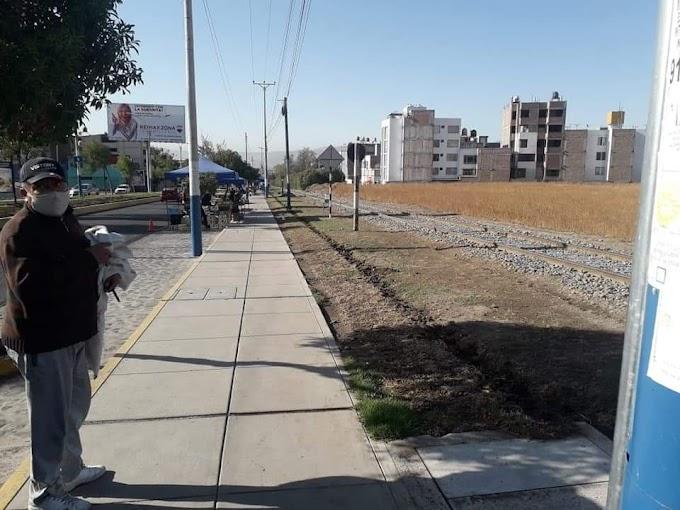 Sustraen 600 arbolitos plantados en la Av. Metropolitana en el distrito de Yanahuara