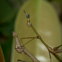 Animals of the Ecuadorian Amazon