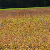 Les Hautes-Lisières (Rouvres, 28), 22 septembre 2011. Photo : J.-M. Gayman