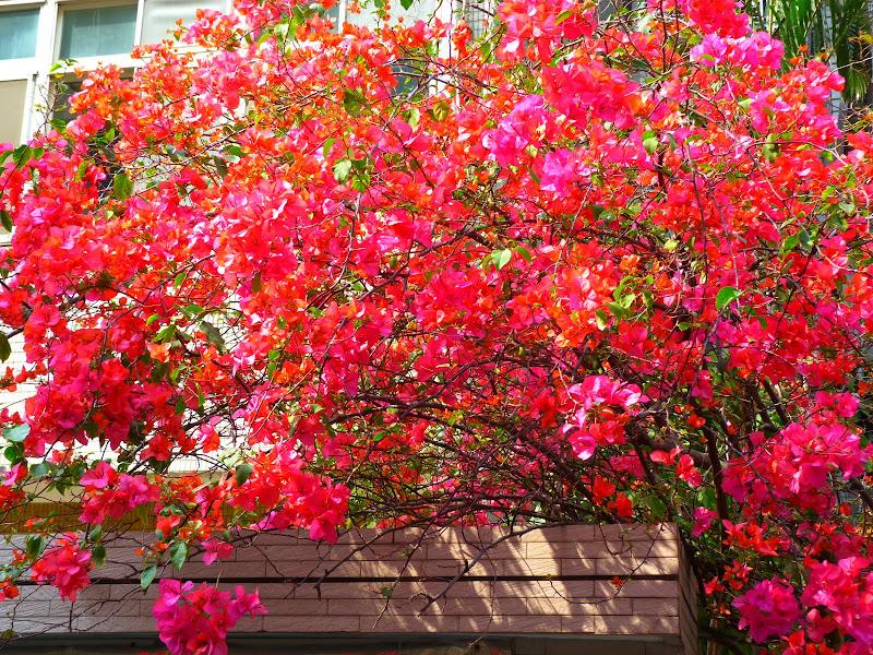 TAIWAN Taipei Dahu Park et dans le quartier de SHIH CHIEN University - P1260314.JPG