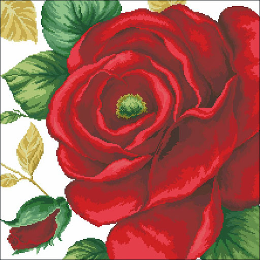 Red Rose chart