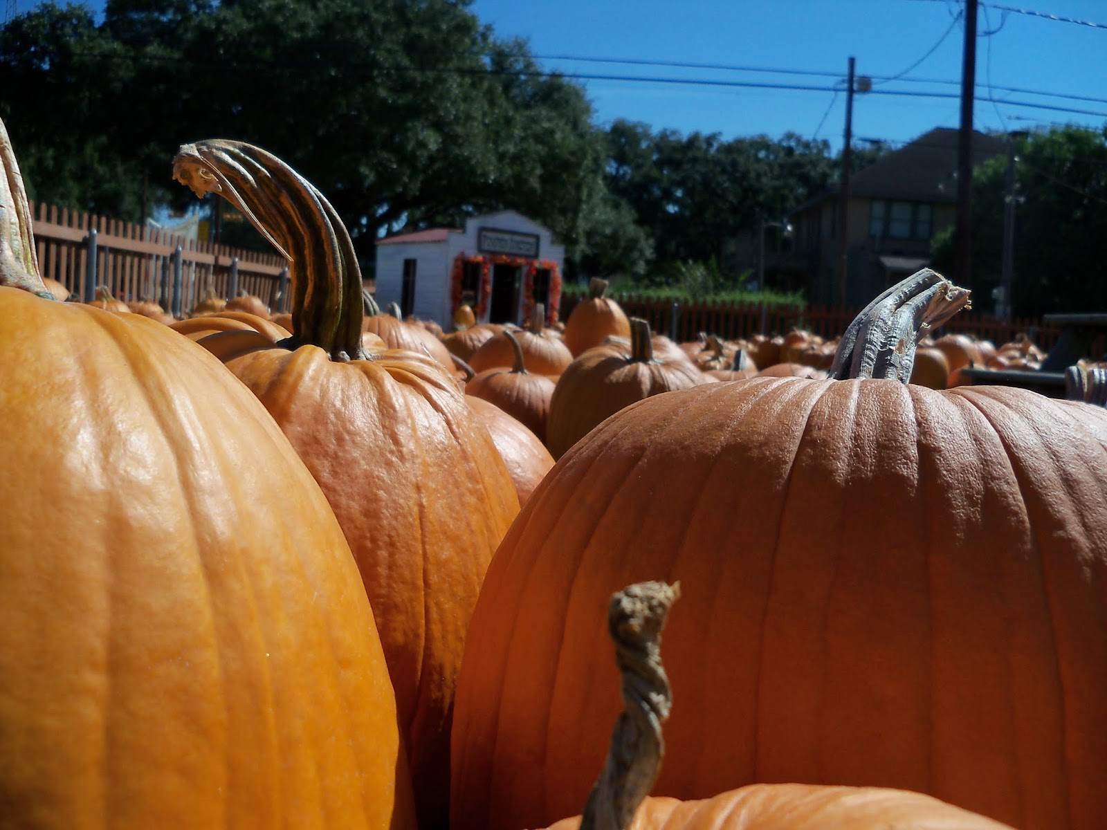 Pumpkin Patch 2015 - 100_0404.JPG