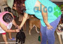 Campaña de asistencia en Mangomarca SJL (3)