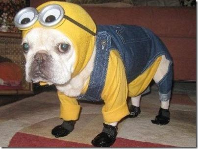 disfraces divertidos para perros  (14)