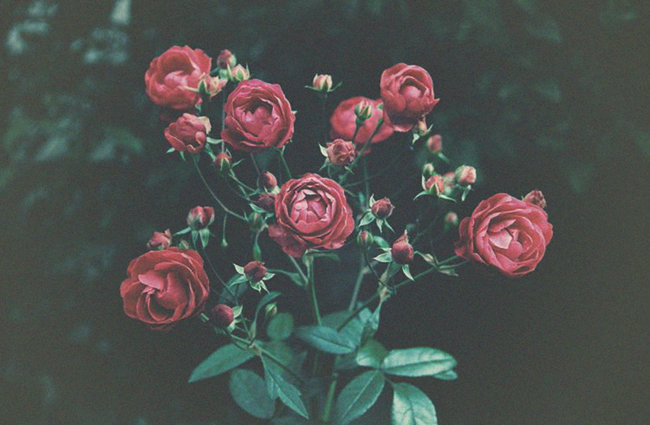 Black Roses - Talking about Chronic Illness and Mental Health | Lavender & Twill
