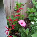 Gardening 2011 - 100_7382.JPG