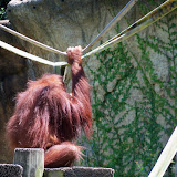 Houston Zoo - 116_8484.JPG