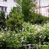 Этот сад вырастили у своего подъезда глухонемые пенсионерки, ветераны труда. Каждую весну уже третий год подсаживают новые цветы, поливают, ухаживают.