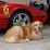 Rosso Ferrari's profile photo