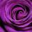 duwi hartatik's profile photo