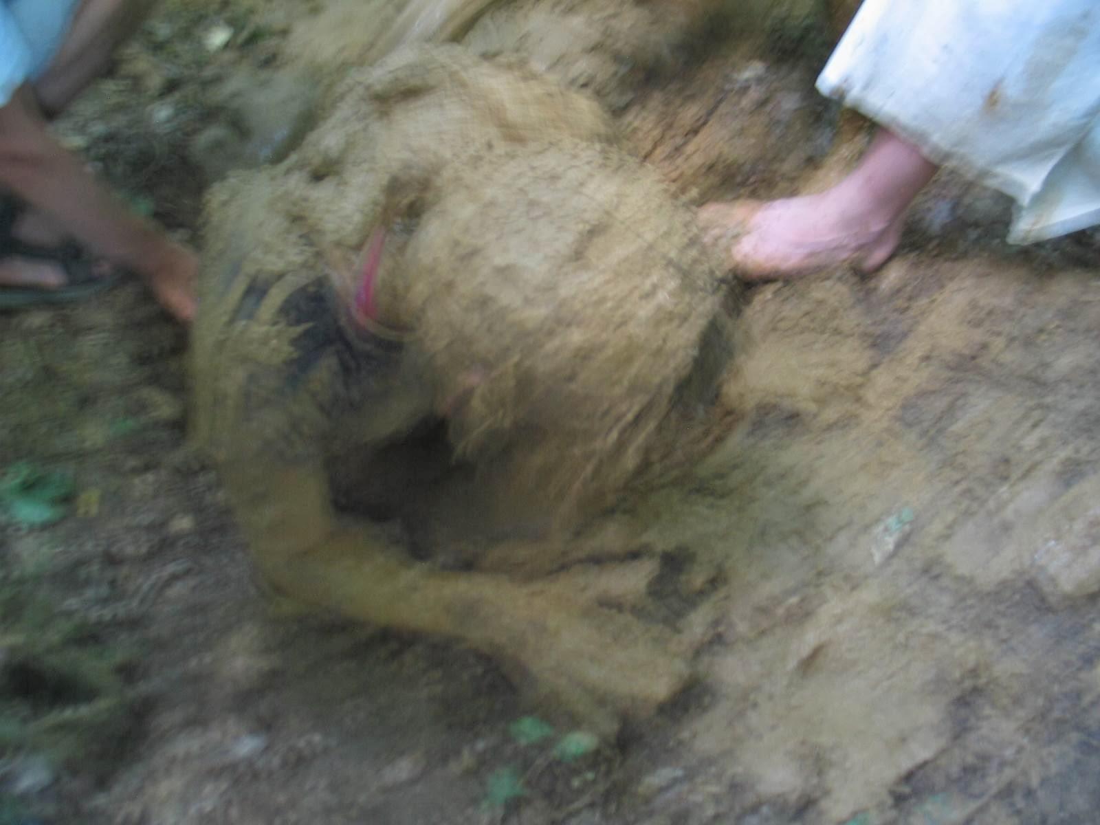 Taborjenje, Lahinja 2006 1.del - IMG_4881.JPG
