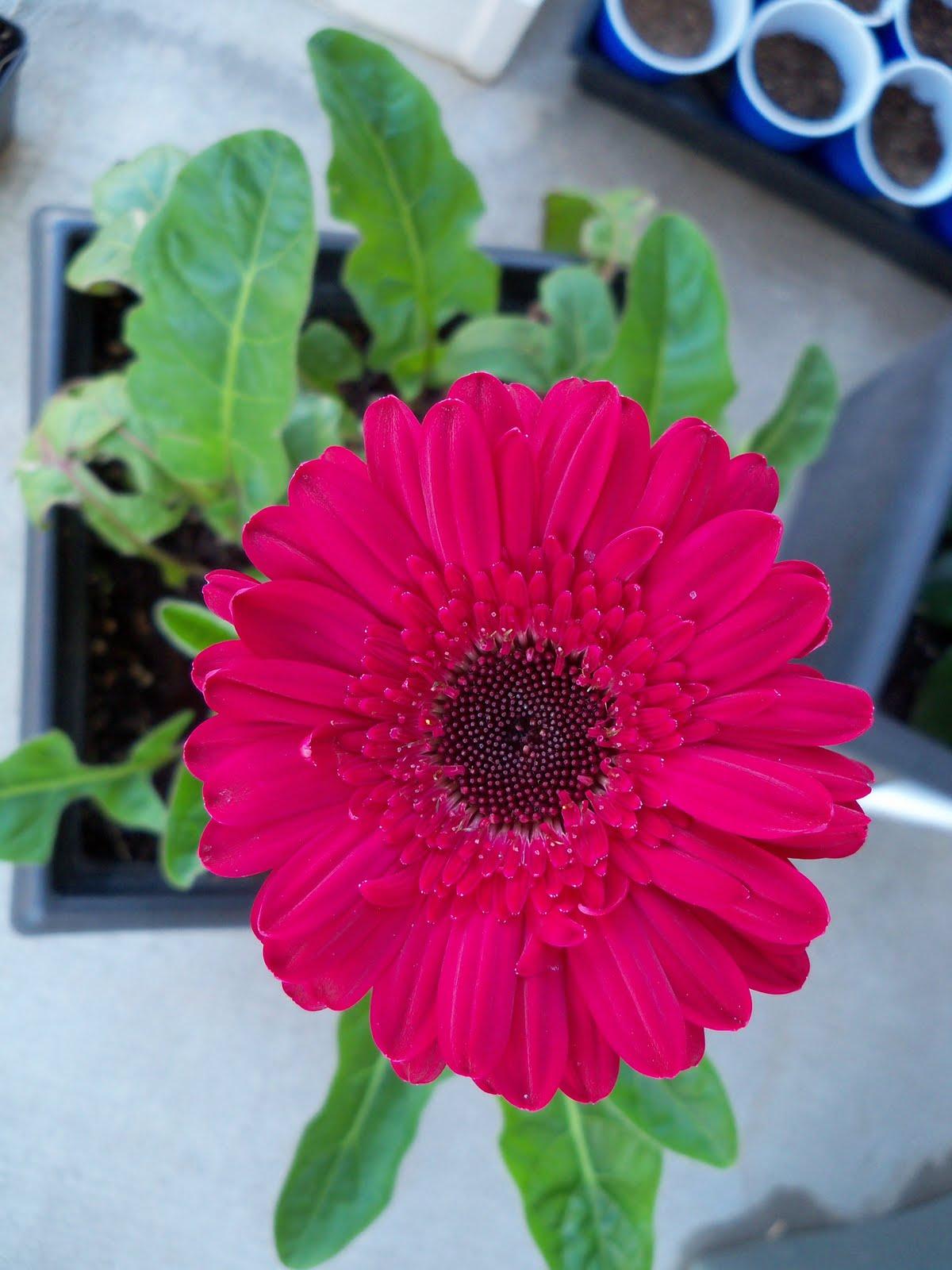 Gardening 2010 - 101_0481.JPG