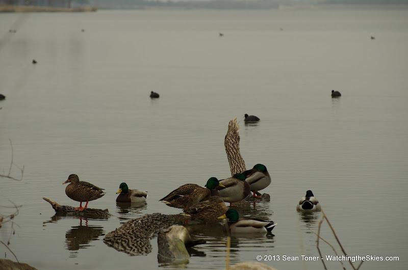 01-26-13 White Rock Lake - IMGP4327.JPG