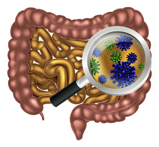 Inside view: The right microbes in your stomach seem to be important in preventing a number of diseases, research suggests. Pictrue: 123RF/CHRISTOS GEORGHIOU
