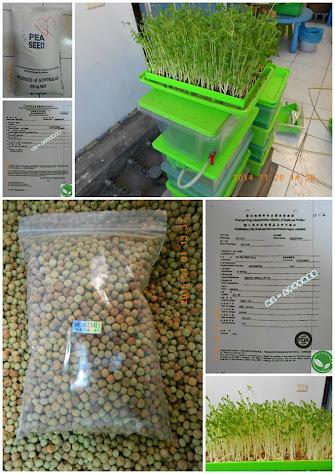 居家有機種植的豌豆苗菜 & 進口澳洲豌豆 & 衛福部與農委會檢疫證明 & 全自動有機芽菜機
