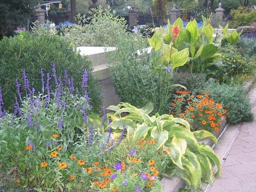 Grand foliage enhances flower beds.