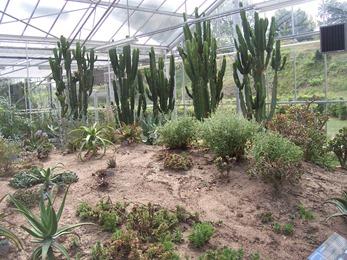 2010.08.13-024 plantes de climat sec