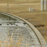01-26-13 White Rock Lake - IMGP4362.JPG