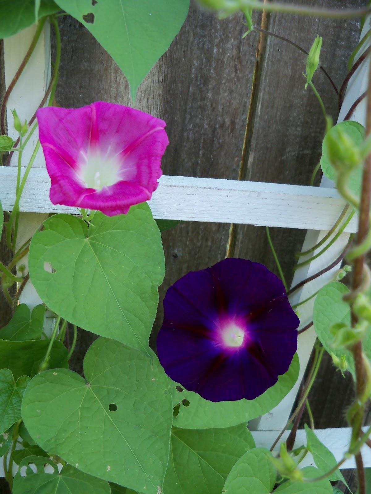 Gardening 2011 - 100_7789.JPG