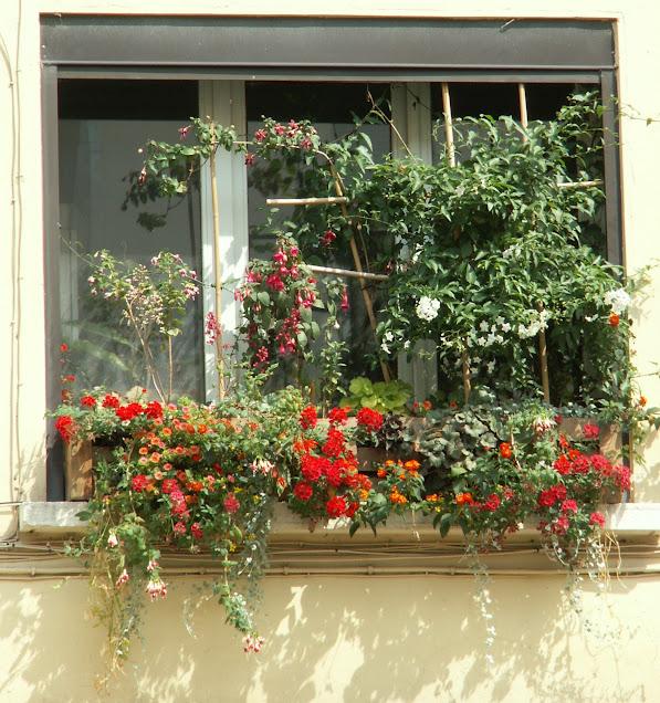 Jardinières en pallette avec mur végétal incorporé PICT0114