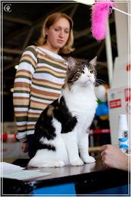 cats-show-24-03-2012-fife-spb-www.coonplanet.ru-031.jpg