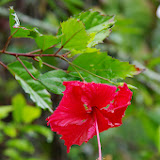 06-23-13 Big Island Waterfalls, Travel to Kauai - IMGP8846.JPG