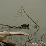 01-26-13 White Rock Lake - IMGP4344.JPG
