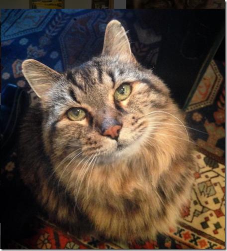 gato mas viejo del mundo