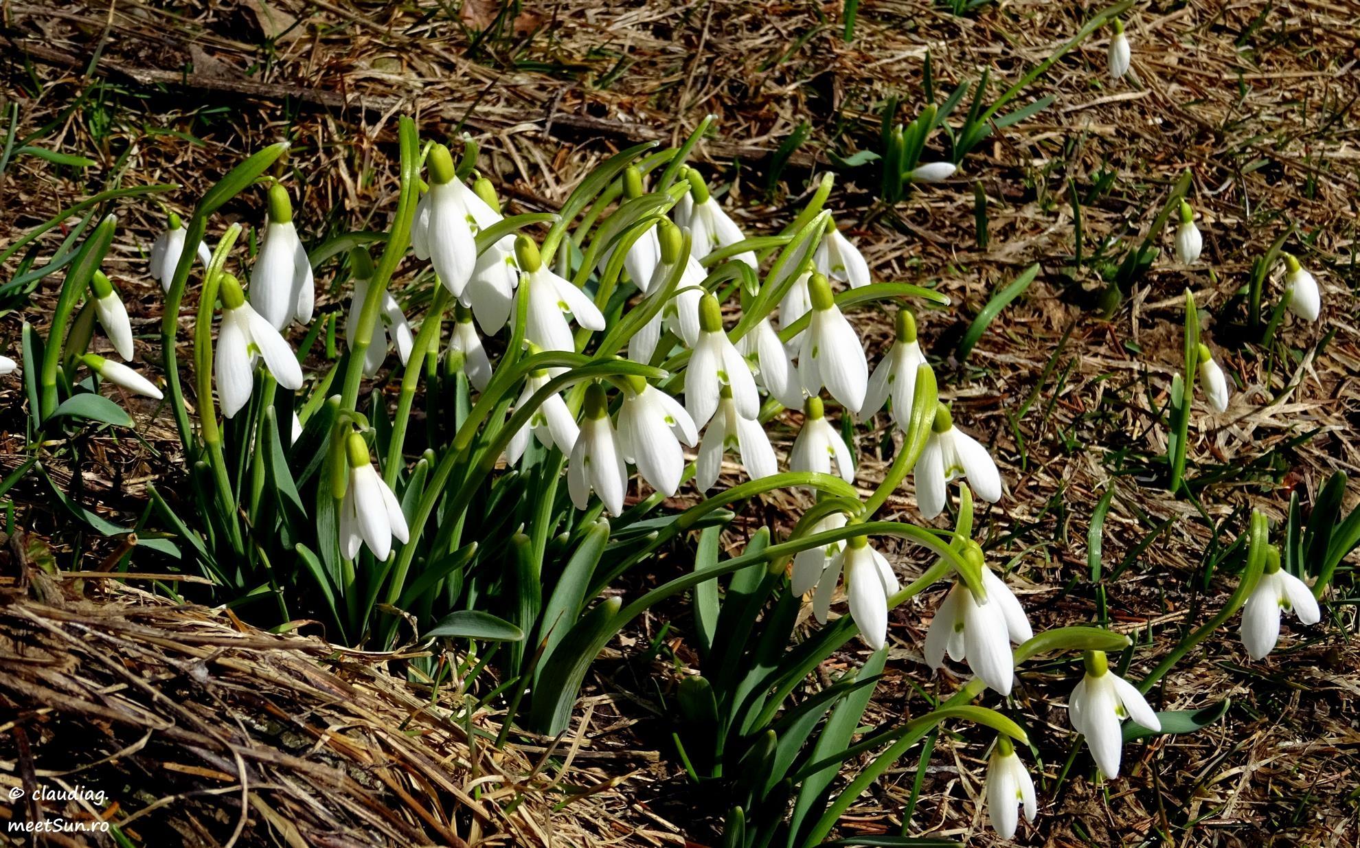 Flori De Primăvară Meetsun Ro