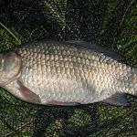 20160611_Fishing_Pryvitiv_044.jpg