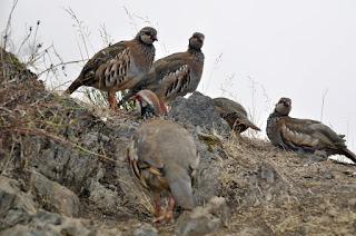 gorskie-ptaszki