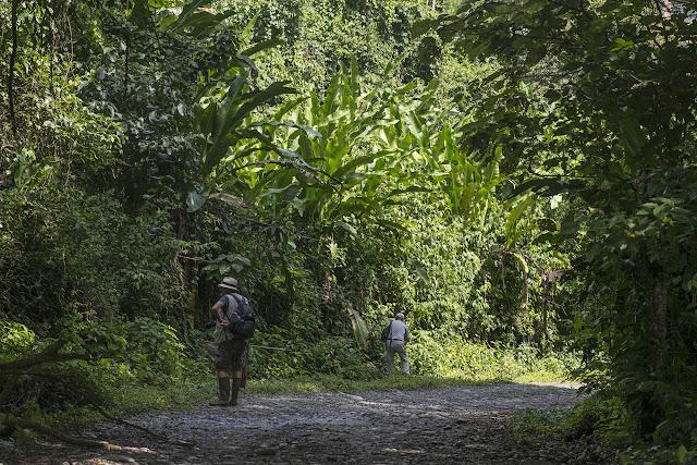 Entre Cachipay et San Rafael, à l'est de Santa María en Boyacá, 870 m (Boyacá, Colombie), 3 novembre 2015. Photo : B. Lalanne-Cassou